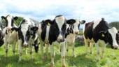 Germania cere UE masuri in sprijinul producatorilor de lactate