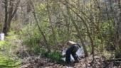 Varga: In Romania se taie de doua ori mai multi copaci decat se planteaza
