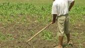 Agricultorii care iau credite pentru investitii pot rambursa cu pana la 50% mai putin