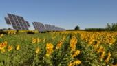 A inceput cursa finala pentru fermele fotovoltaice