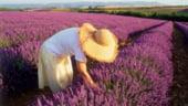 STARTUP - Cultura de lavanda, o afacere ca-n Provence cu profit anual de 10.000 de euro