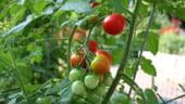 Producatorii de legume vor continua sa inregistreze pierderi si in 2013