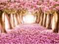 Festivalul florilor de primavara in 4 destinatii inedite de vacanta