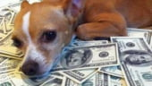 Un caine din Belarus mosteneste un milion de dolari