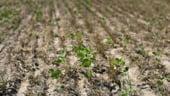 Secretar de stat la Agricultura: Avem nevoie de un singur fond mutual pentru despagubiri