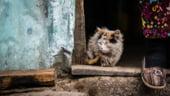 CE avertizeaza: Saracia e in crestere in Romania