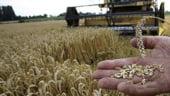 Agricultura in 2013: Ce-am semanat si ce-am cules
