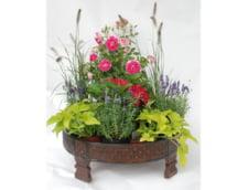 scaunel indian flori